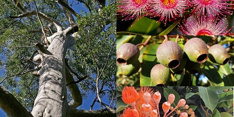 Plant Hunters Walk at Mount Lofty Botanic Garden tickets