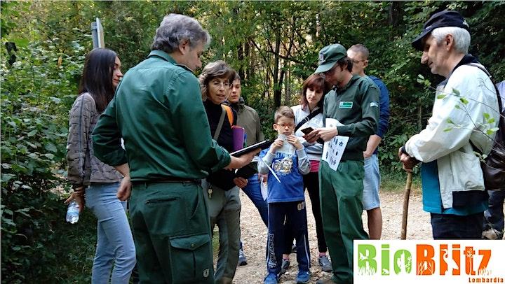 Immagine Festa della biodiversità: bioblitz 2021