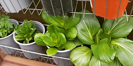 Grow your own garden using scraps! tickets