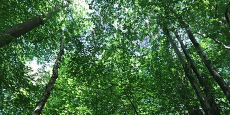 Introduction to Forest Bathing tickets
