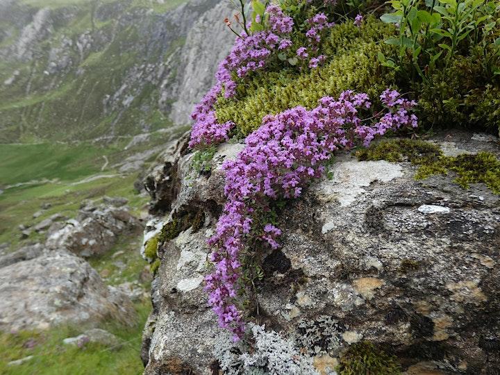 Nature of Snowdonia - Nice to know, need to know? image