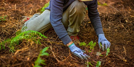 Plant a Tree Day in San Francisco: Volunteer with One Tree Planted! tickets