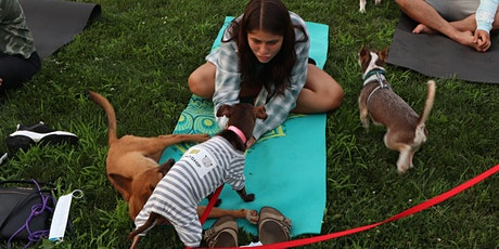 Doggy Noses & Yoga Poses - Limitless Puppy Poses! tickets