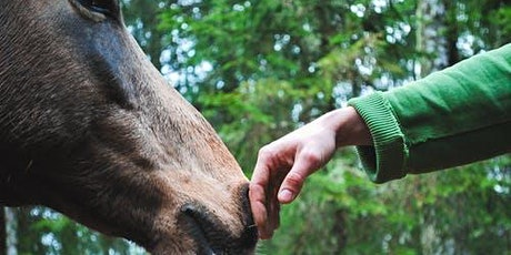 Equine Assisted Therapy tickets