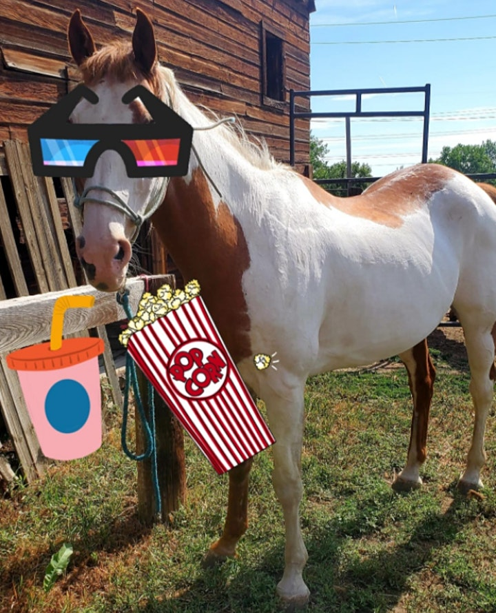 Outdoor Movie Night! Fundraiser for The Horse Protection League. image