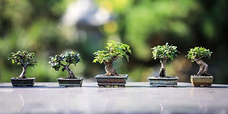 Bonsai for Beginners with Glen Howarth tickets