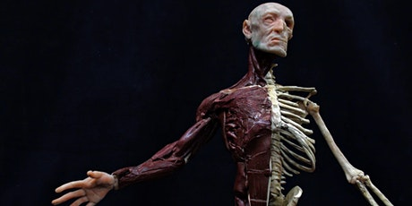 Ecorche' (3D Anatomy Figure) Workshop with master artist Rey Bustos tickets