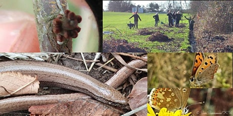 Butterfly and slow worm habitat restoration with KUBAG tickets