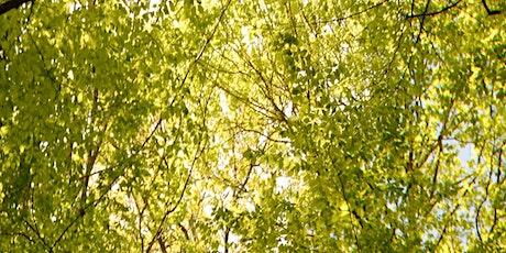 L'arbre au fil du temps billets