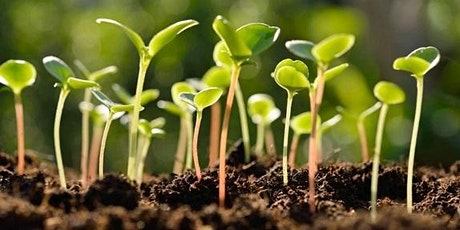 Sprout Safety Alliance (SSA) Sprout Grower Blended Course Part 2 (Virtual) tickets