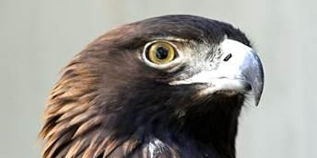 Birds of Prey with Farmington Land Trust and Horizon Wings tickets