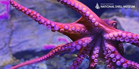 VIP Octopus Encounter tickets