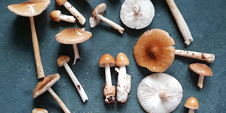 Full-day Fungi Identification Workshop, with wild lunch (East Sussex) tickets