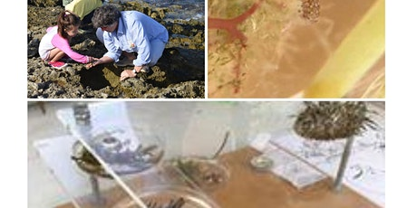 Discover the Biodiversity on our beach tickets
