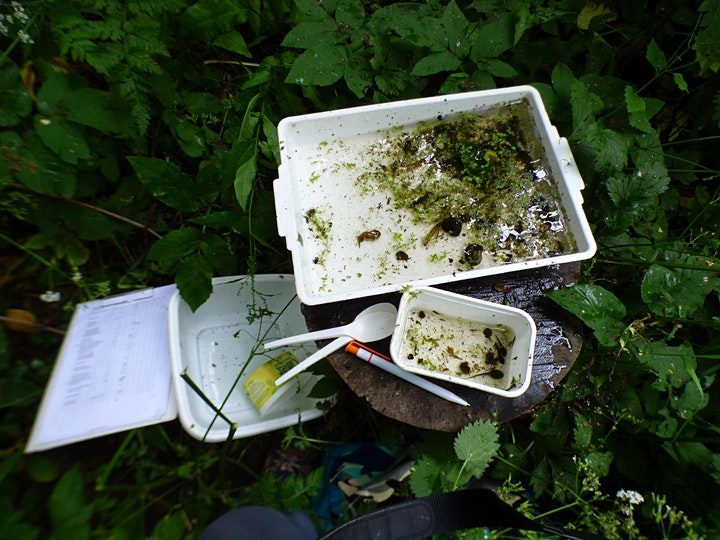 Pond Dipping for the Under 7's at Wellsway School image