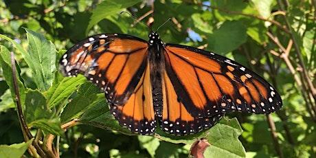 Nature Buddies Beautiful Butterflies Pre-K Program tickets