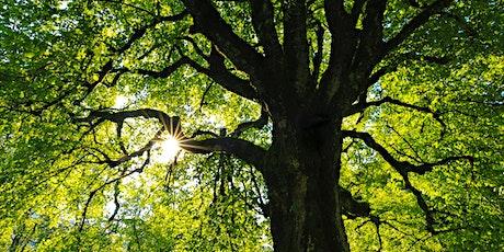 Écorandonnée Nos géants les arbres tickets