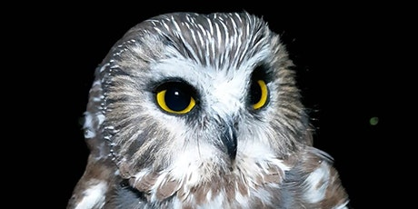 Owl Banding at the Beaverhill Bird Observatory tickets