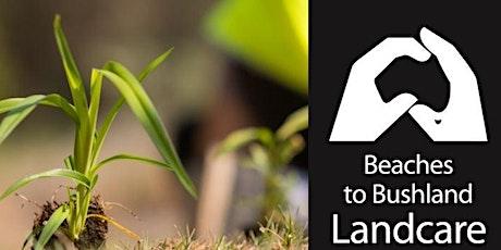 Hinterland Regional Park Bushcare Group  Tree Planting tickets