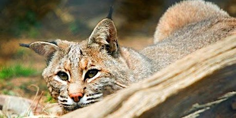 Webinar: NJ's Elusive Hunter - The Bobcat tickets