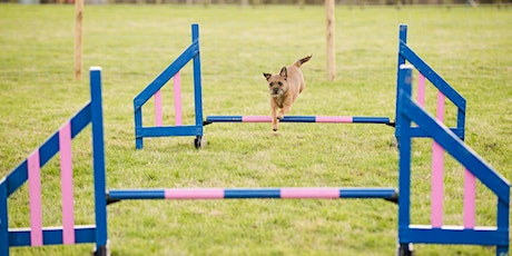 Beginners Dog  Agility - 8 Week Course tickets