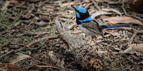 Inviting Small Birds to your Garden - Frankston City Council tickets