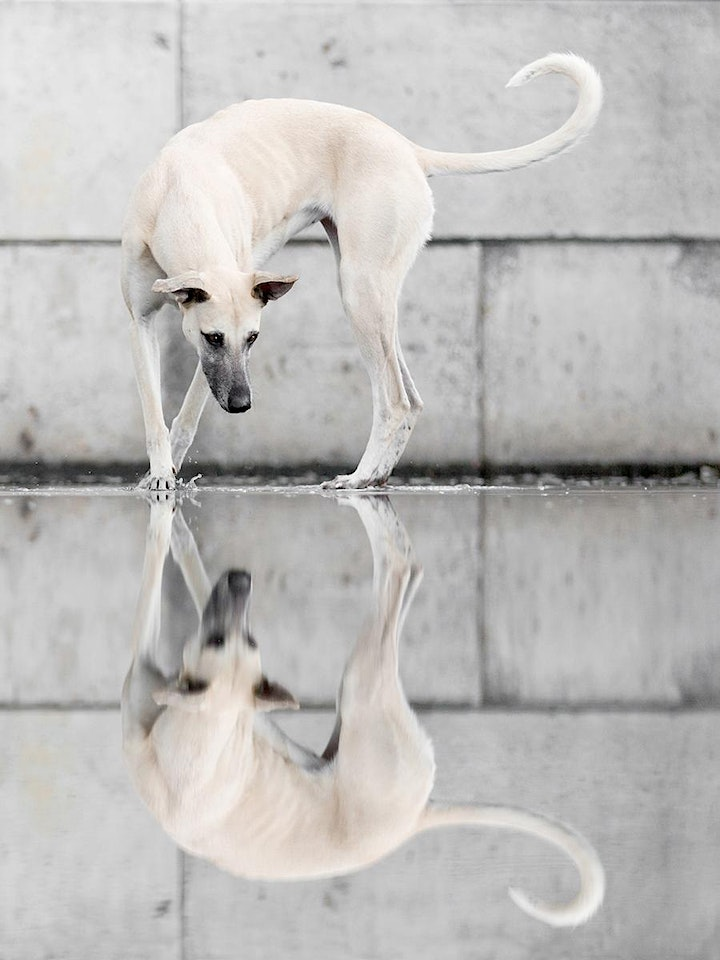 Dogsonality - a creative guide to pet photography. image