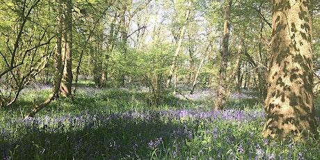 Leamington Spa, Warwickshire Wild Food Foraging Course/Walk tickets