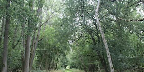 Wildlife Live Webinar - Trees, Woods & People (EWC 2821) tickets