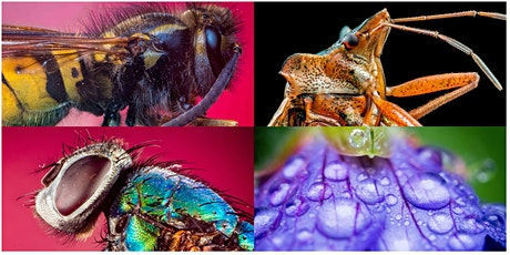 Online Macro And Focus Stacking on Olympus Workshop tickets