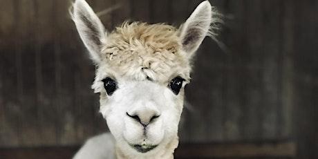 Alpaca Barn Tours tickets