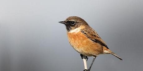 Bird ID  (EWC 2806) tickets