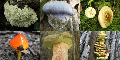 Intro to Mushroom Identification Nature Walk - Bunker Hill North Flatwoods tickets