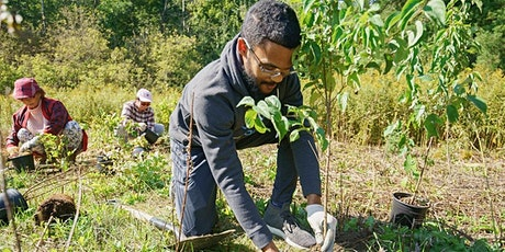 Plant a Tree Day in Toronto: Volunteer with One Tree Planted! tickets