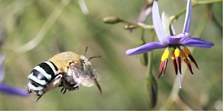 Native bees in your backyard tickets