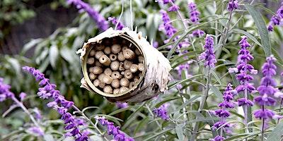 Children's Week – Bee a Pollinator – make a bee hotel
