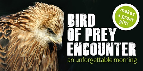 ICBP Bird of Prey Encounter tickets