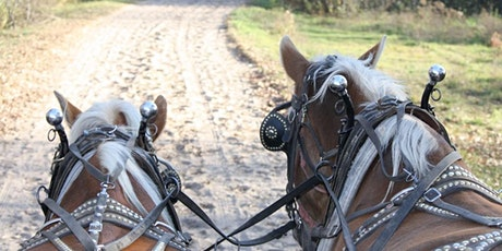 Ladies' Day Out - Wagons & Fire Pits tickets