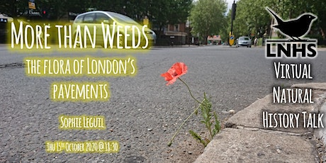 More Than Weeds: the flora of London's pavements by Sophie Leguil tickets