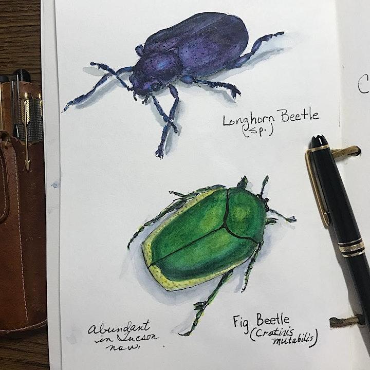 Wild Wonder Nature Journaling Conference 2020: A Global Online Gathering image