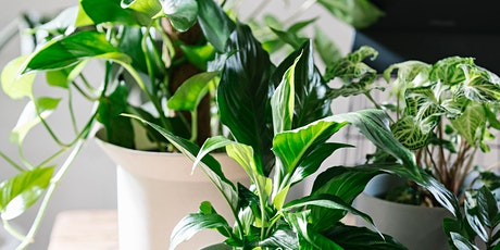 Happy House Plants with Claire Greenhill tickets