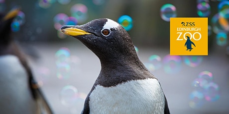 Penguins and Pancakes at Edinburgh Zoo - September tickets