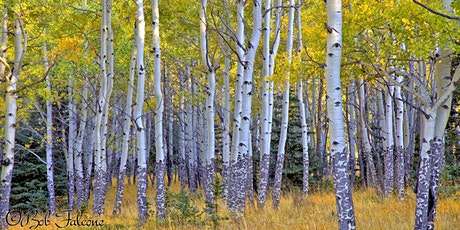TOSC Member Hike - Fall Colors Photography tickets