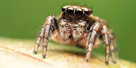 Nos amis les araignées billets