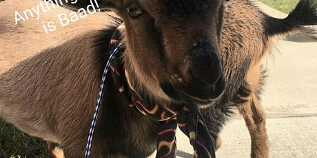 Goat Yoga and Brew tickets