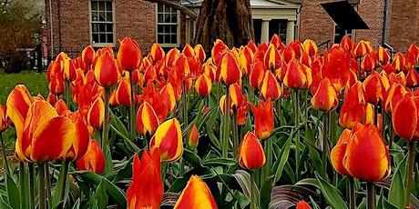 Children's Tulip Planting Workshop tickets