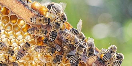 Bees! Sustainable Beekeeping 101 tickets
