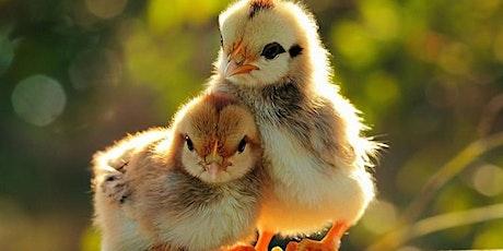 Flocktober Chick Day tickets