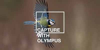 Capture with Olympus: Birds (Beginner)