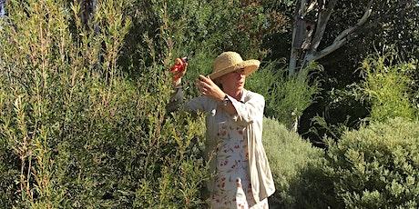 Showing native garden plants at their best tickets